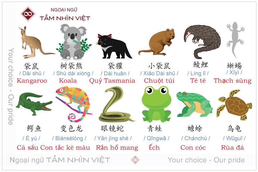 Động vật có túi và loài bò sát tiếng Trung