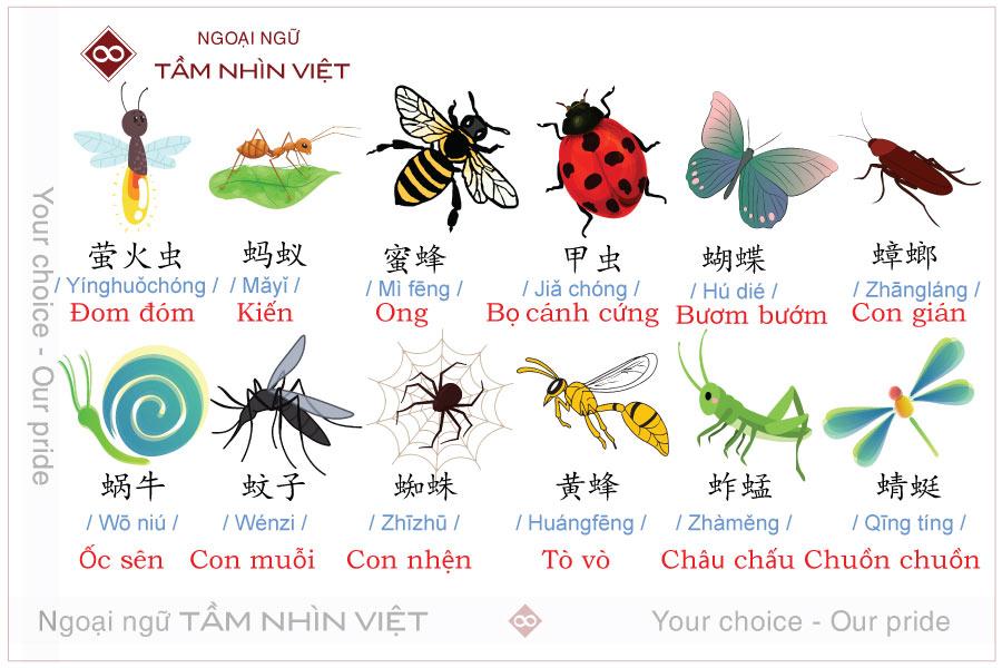 Từ vựng tiếng Trung về các loại côn trùng
